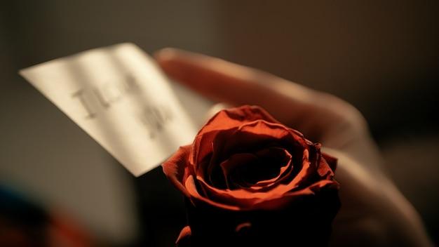 Intreepupil opmerking i love you bij zonsondergang in vrouwelijke hand op achtergrond van rode roos