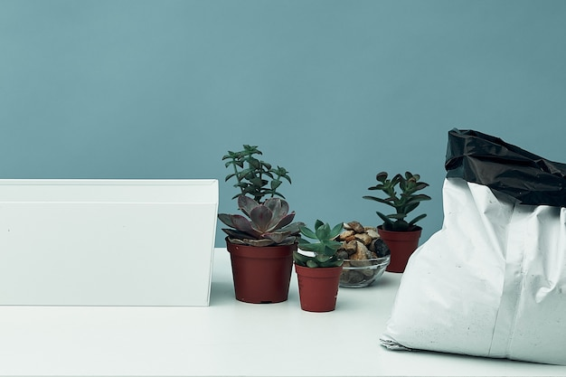 Inventaris voor de voorbereiding van het verplanten van kamerplanten