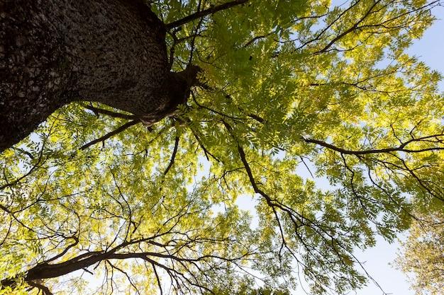 Invloed en impact van het herfstseizoen op de natuur op het voorbeeld van bomen of andere planten close-up