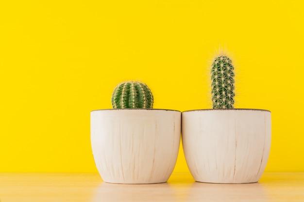 Inzameling van cactussen in witte karamelpot op heldere gele muur. sutable cactus voor beginners. binnenlands tuinieren.
