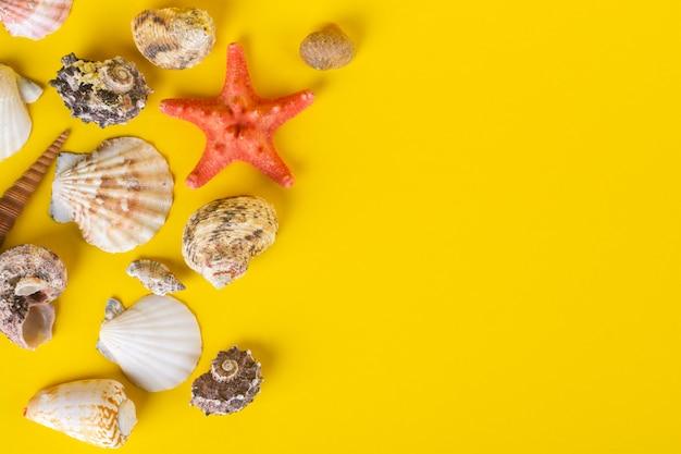 Inzameling van zeeschelpen op geel.