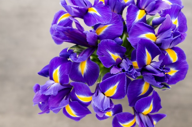 Iris bloem close-up