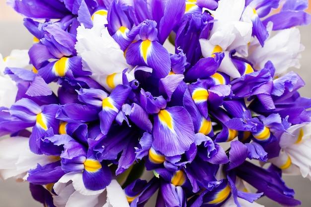 Iris bloemen achtergrond, lente bloemen patroon.