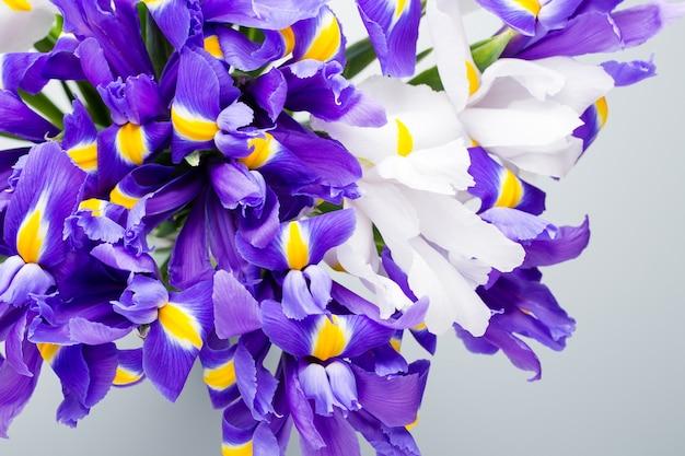 Iris bloemen oppervlak, lente bloemenpatroon.