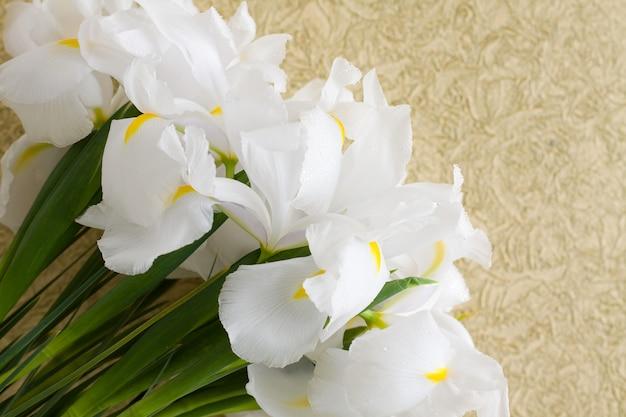 Irisbloemen op uitstekende gouden achtergrond