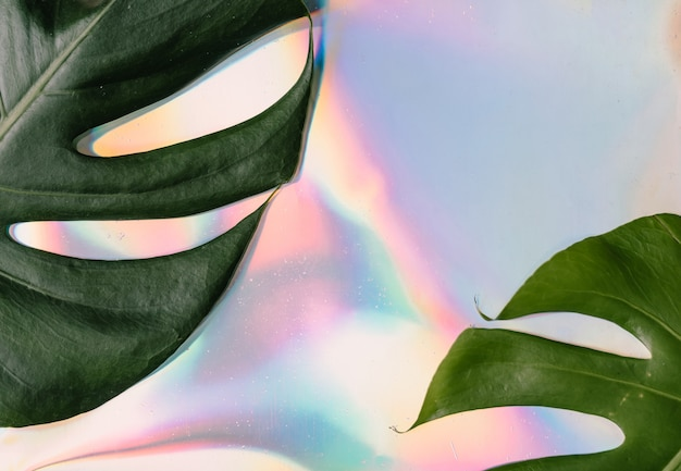 Iriserend. holografische abstracte zachte pastelkleurenachtergrond met monstera tropische bladeren.