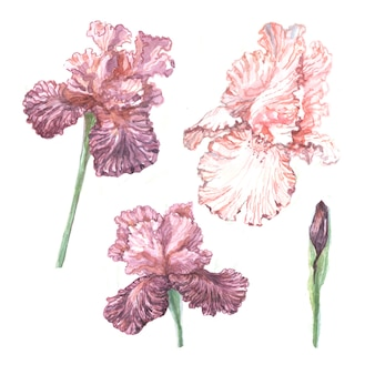 Irissen bloemen lente bloeiende illustratie handgetekende print textiel briefkaart achtergrond schets