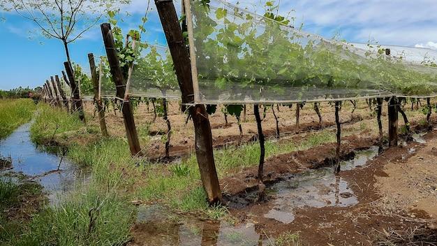 Irrigatie door oneffenheden van wijngaarden
