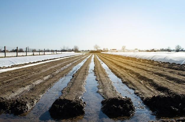 Irrigatie rijen wortelplantages natuurlijk water geven na het zaaien van zaden