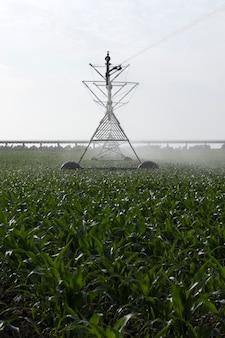 Irrigatie van maïsveld