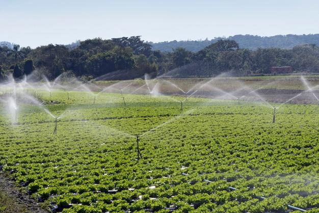 Irrigatiesysteem in actie bij het planten van groenten
