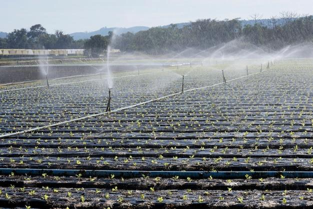 Irrigatiesysteem, in tegenlicht, bij het planten van groenten