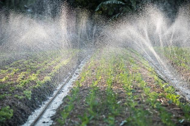 Irrigatiesysteem op het water geven in de plantaardige aanplanting