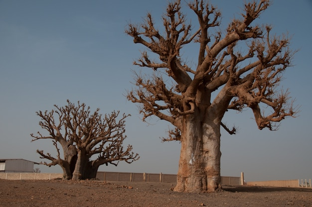 Isla goree senegal, afrika