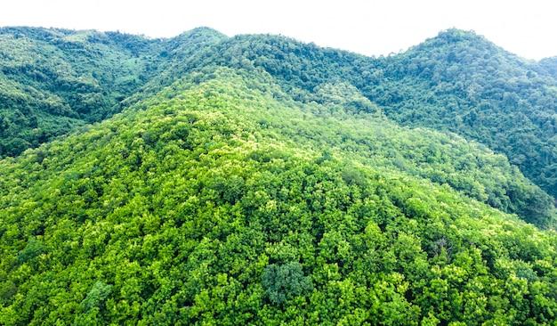 Isoleert de de berg groene natuurlijke bos van de landschaps luchtmening in het regenseizoen op witte achtergrond