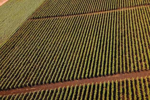 Italiaans landschap prachtige boerderijen en wijngaarden prachtige luchtfoto landschap italië filmische ...