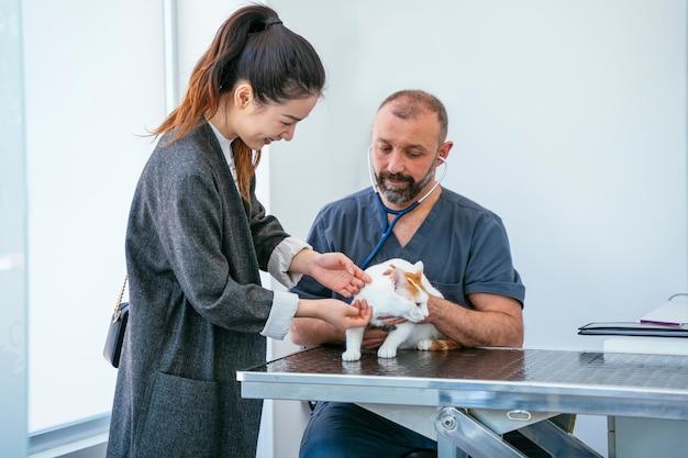 Jaarlijkse gezondheidsinspectie van een jonge donzige kat. veterinaire controle van een ziek dier.