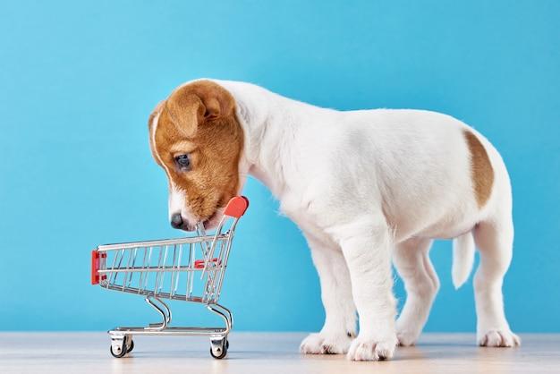 Jack russel-hondpuppy onderzoekt lege het winkelen karretjekar op blauwe muur