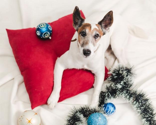 Jack russel met kerstmisdecoratie