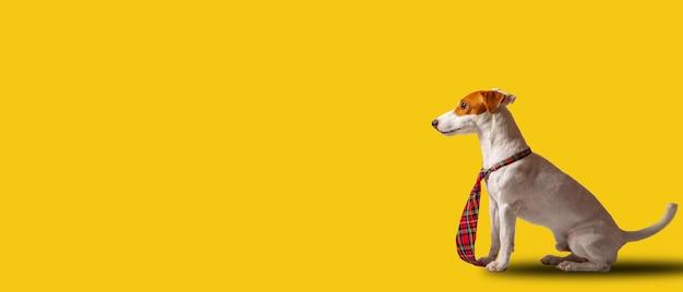 Jack russell terrier-hond kijkt ernaar uit om zijn bedrijf te controleren. animal vision.doggy officer