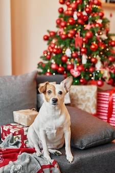 Jack russell terrier op nieuwe jaarachtergrond.