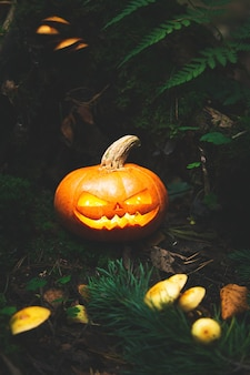 Jack's lantaarn in eng, mystiek bos. gesneden pompoen. halloween-achtergrond.