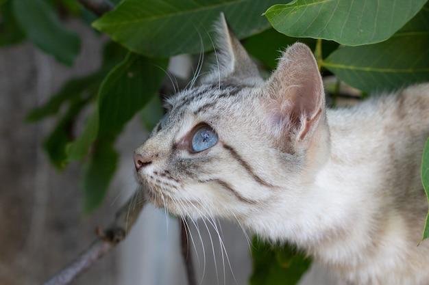 Jagende kat met blauwe ogen op een boom