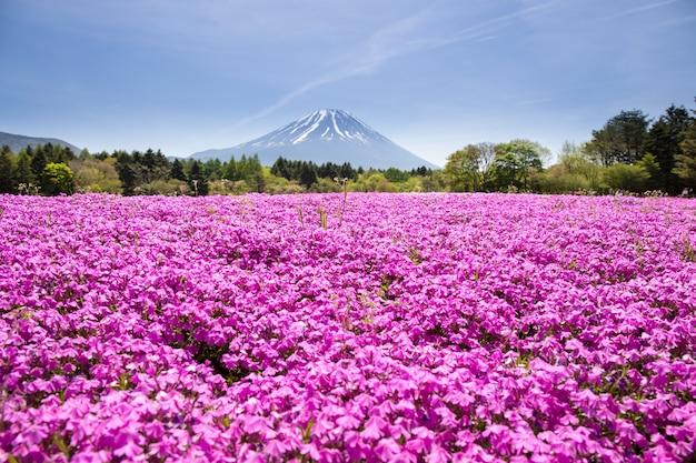 Japan shibazakura festival met het veld van roze mos van sakura of kersenbloesem