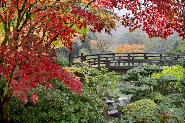 Japanse esdoornbomen door de brug in de herfst