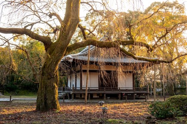 Japanse herfst herfst. kyoto daigoji-tempel.