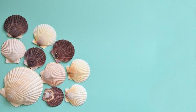 Japanse zeeschelp schelpen op een rij