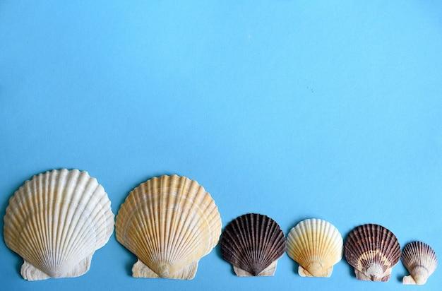 Japanse zeeschelpen op een rij op een blauwe achtergrond