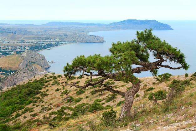 Jeneverbes boom op rots en sudak city achtergrond (krim, oekraïne).