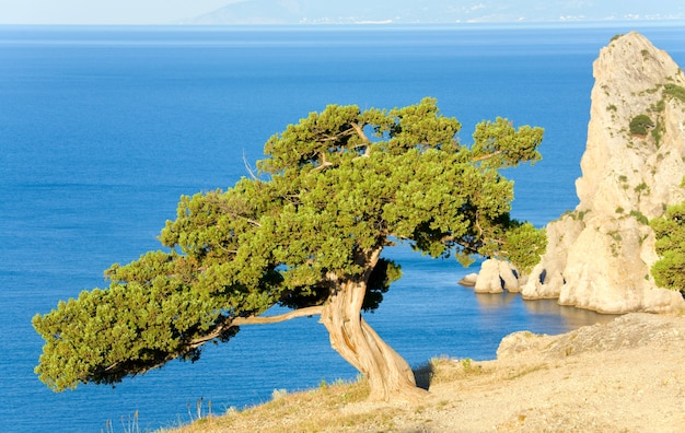 Jeneverbesboom op rots op zeeoppervlak achtergrond (