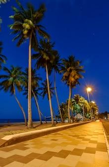Joao pessoa paraiba brazilië kokosbos op het strand van cabo branco in de avond