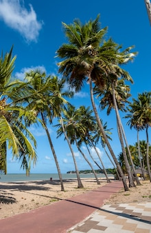 Joao pessoa paraiba brazilië kokosbos op het strand van cabo branco