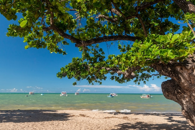 Joao pessoa paraiba brazilië tambau strandboom en boten