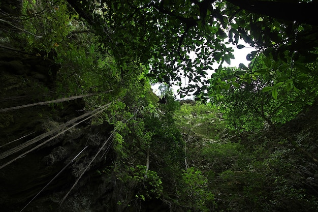 Jomblang-grot bij de stad yogyakarta, java, indonesië