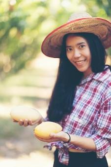 Jong aziatisch landbouwers het plukken mangofruit in organisch landbouwbedrijf