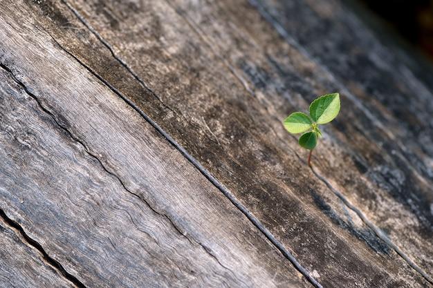Jong boompje op hout