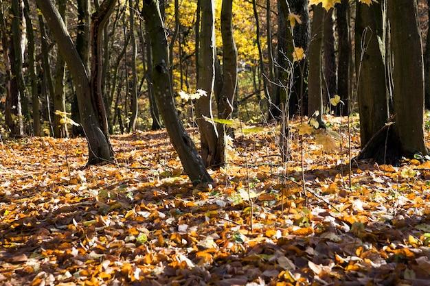 Jong bos met loofbomen in het herfstseizoen, een landschap van prachtige echte natuur