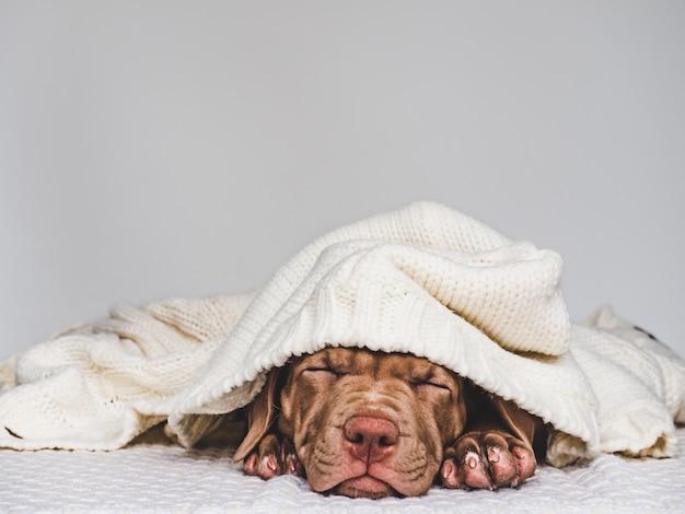 Jong charmant puppy dat in een sjaal wordt verpakt