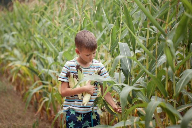 Jong geitjejongen die en graan op landbouwbedrijf op gebied houden in openlucht plukken, in openlucht.
