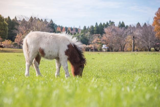 Jong klein schattig paard in een boerderij