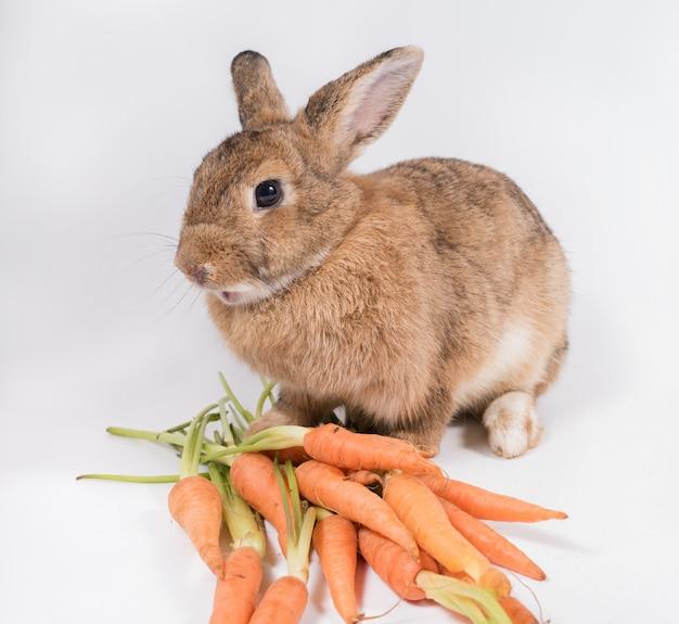 Jong konijn met verse oranje wortel die op witte achtergrond wordt geïsoleerd