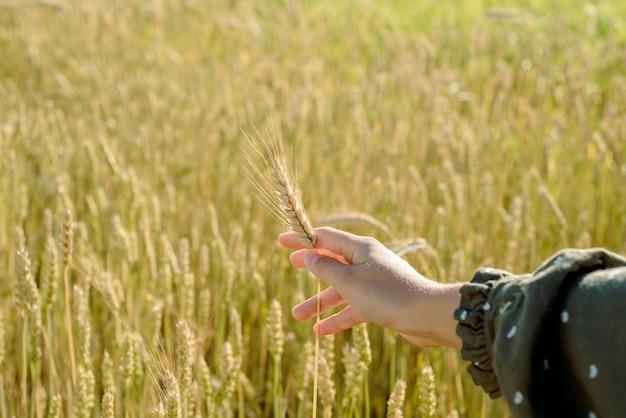Jong meisje in een tarweveld. gaat met zijn hand over de oren. levensstijl.