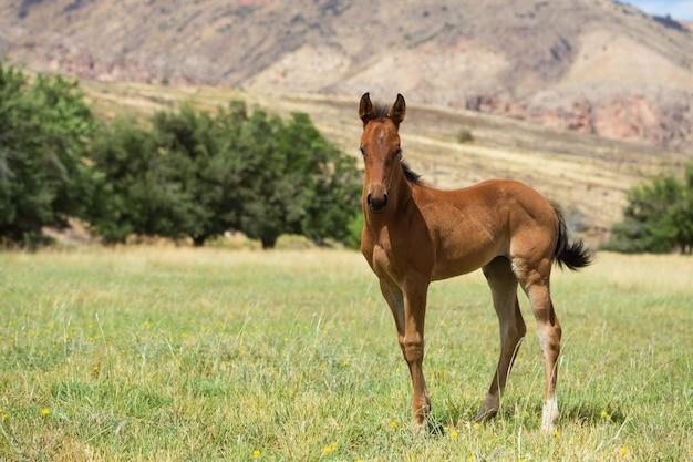 Jong paard in een weiland van utah