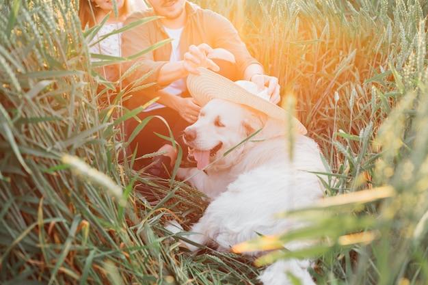 Jong stel rust en heeft plezier met hun hond in het veld op zomeravond in het veld tussen het gras. liefde en tederheid. mooie momenten van het leven. jeugd en schoonheid. rust en zorgeloosheid.