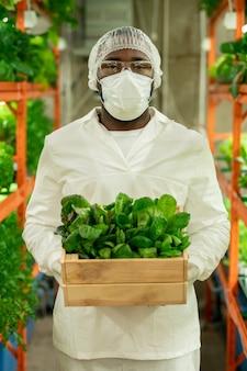 Jonge afrikaanse agro-ingenieur in beschermende werkkleding die een houten kist met groene spinazie vasthoudt terwijl hij voor de camera staat in verticale boerderij