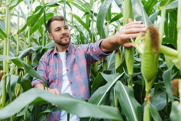 Jonge agronoom die in een maïsveld staat en de opbrengst overneemt.
